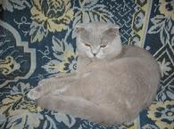 Шотландский мачо приглашает в гости ! ! ! фото